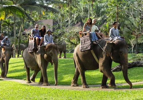 Wisata Gajah Taro