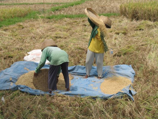 trekking di Ubud balitourmurah.com