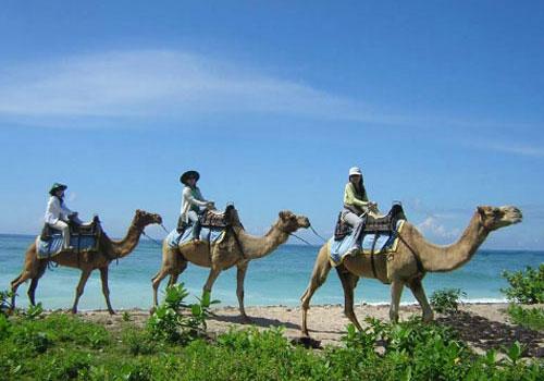 Wisata Unta di Bali