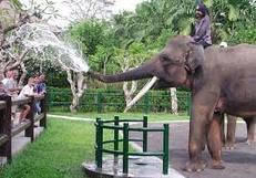 wisata gajah taro balitourmurah.com