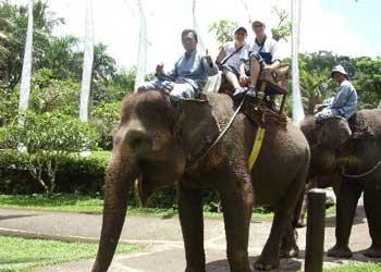 Wisata gajah ayung balitourmurah.com
