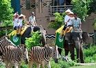 bali Safari balitourmurah.com
