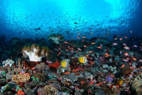 Reef scene on Toyapakeh