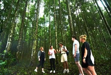 Jungle Trekking Hutan Tamblingan