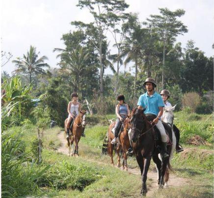 Ubud Horse Stable
